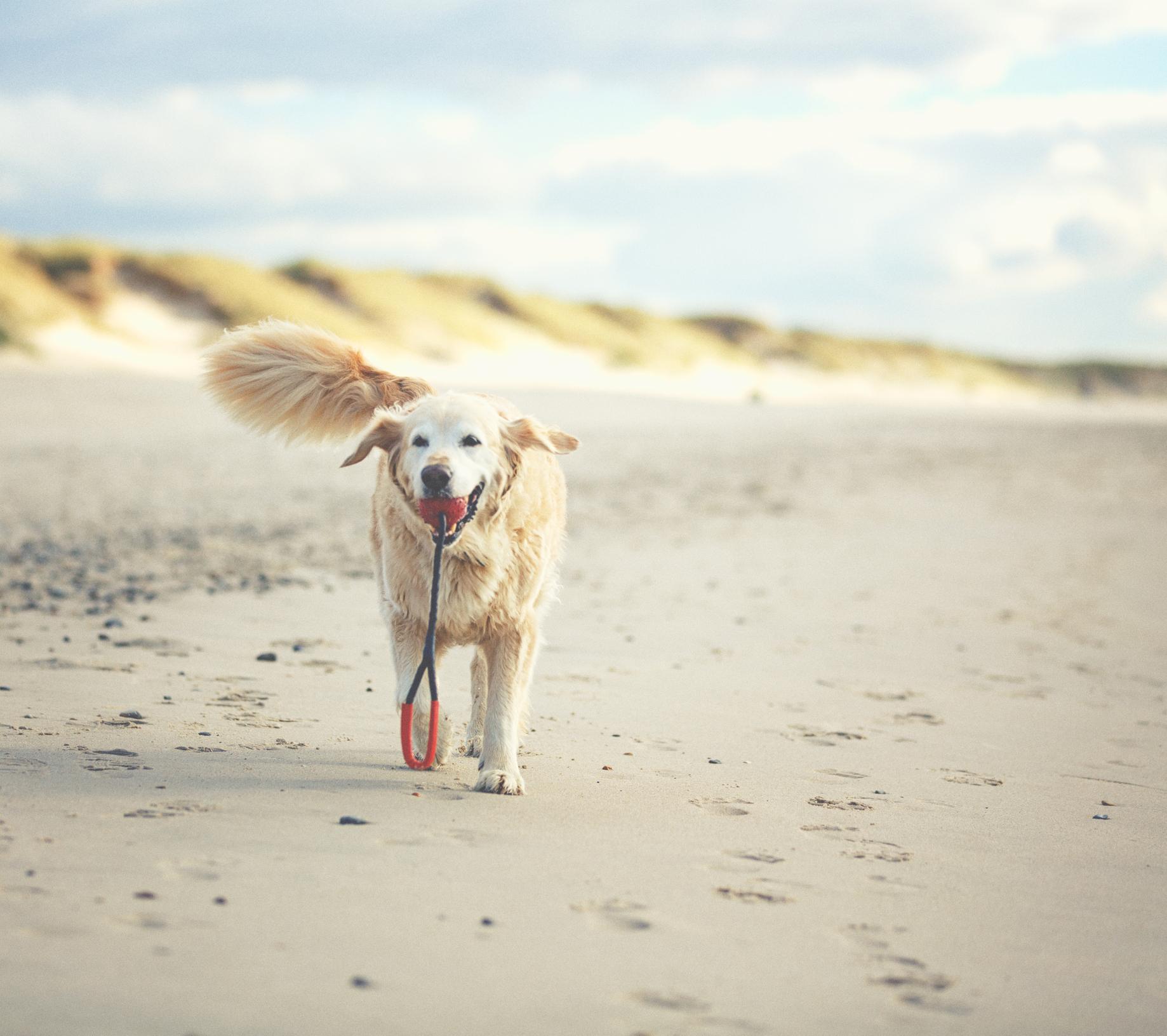 Pälsvård för långhåriga hundar